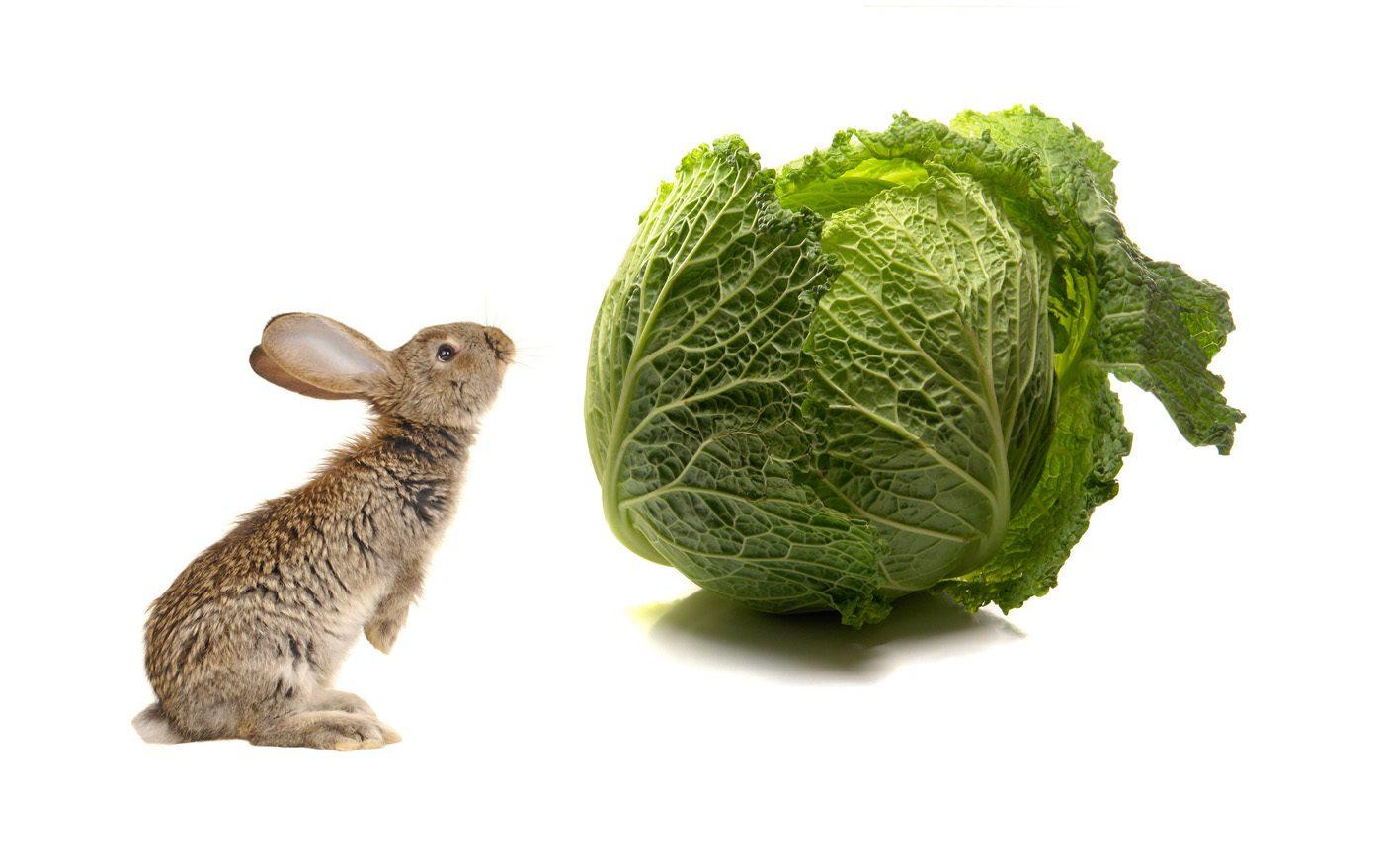 Alimentos venenosos para los conejos domésticos :: Imágenes y fotos