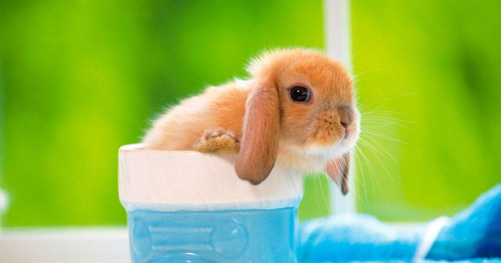 Información sobre los conejos bebés