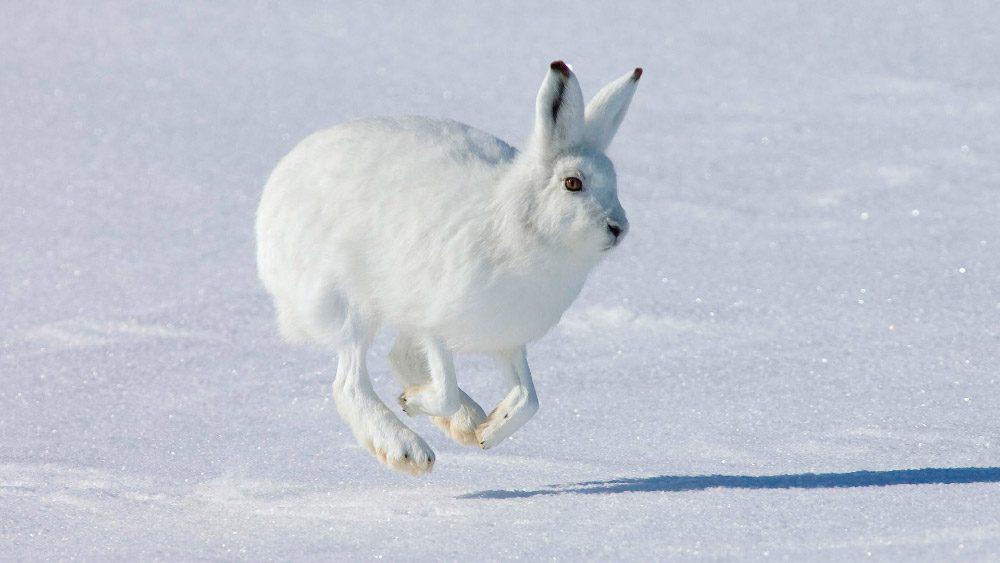 Galerías de imágenes de Conejos Wiki