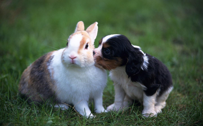 Conejo doméstico con un cachorro de perro :: Imágenes y fotos