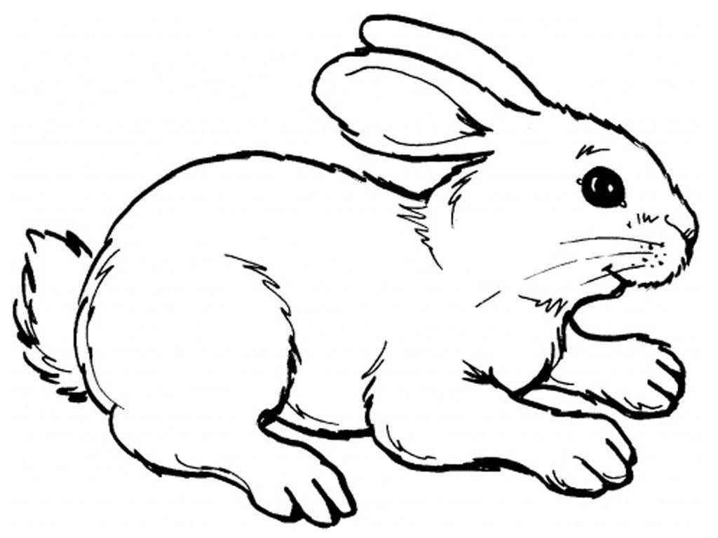 Galera de imgenes Dibujos de conejos para colorear