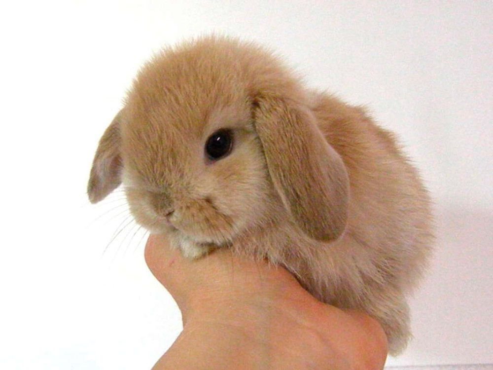 Toy conejos enanos en casa mascotas - Casas para conejos enanos ...