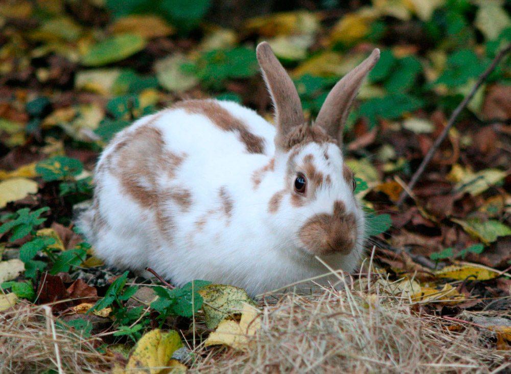 Fotos de conejos de razas