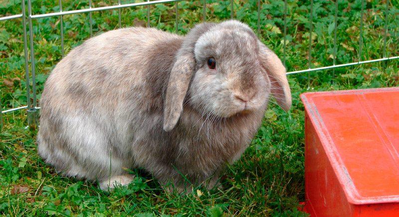 Jaula para conejos qu debemos saber - Casas para conejos enanos ...
