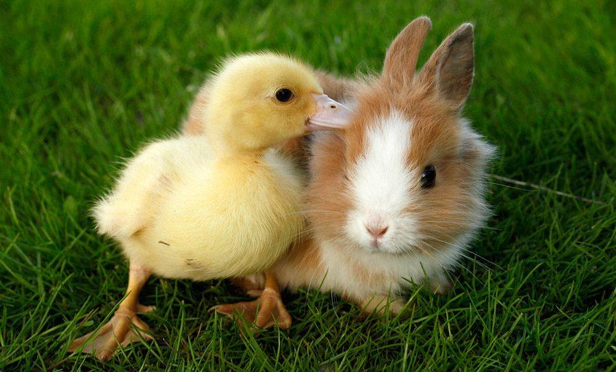Leyendas Y Mitos Sobre Conejos