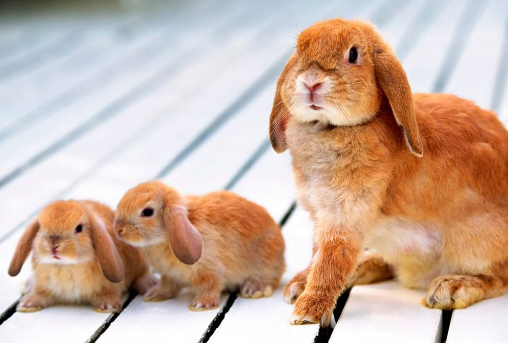 Rabbit Picture For Kid