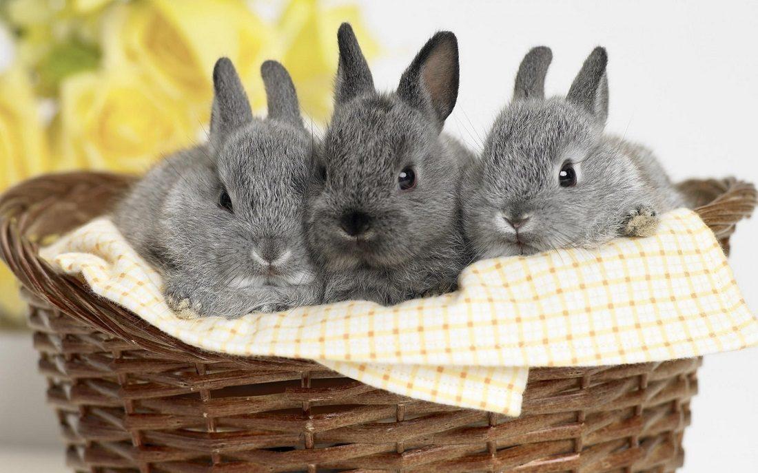 Fotos de conejos de razas 23