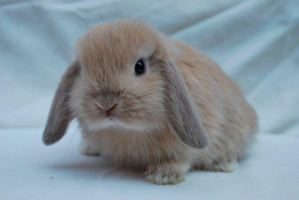 Fotos de conejos de razas 82